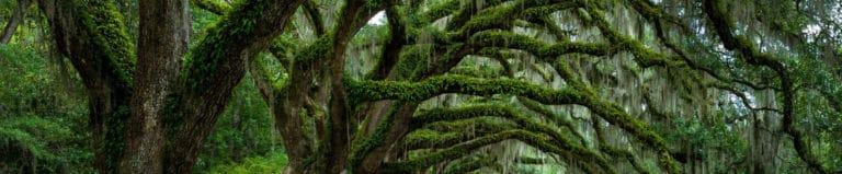projektowanie ogrodów krakow, ogrody projektowanie krakow