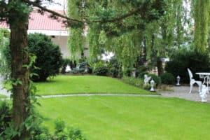 piękny trawnik kraków