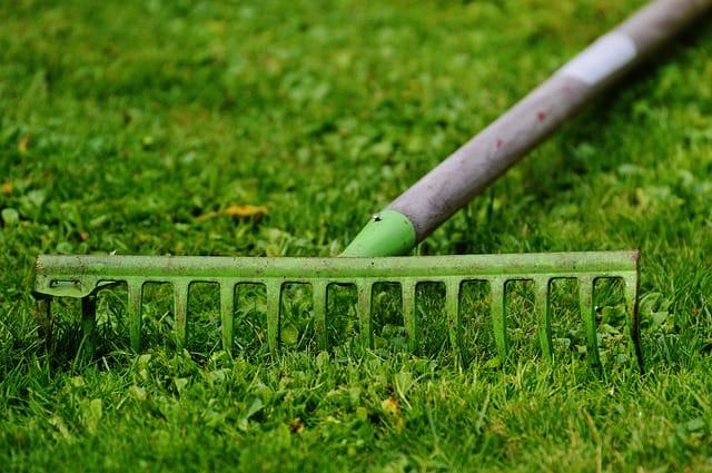 Jak dbać o trawnik jesienią