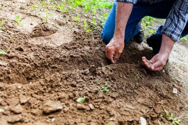 Prawidłowa kolejność prac przy zakładaniu ogrodu
