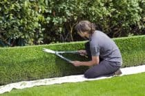 Wiosenne prace w ogrodzie – opryski drzew, przycinanie, wertykulacja