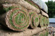 Zakładanie trawnika z rolki krok po kroku