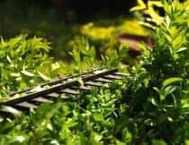 Urządzenia akumulatorowe do ogrodu – jakie wybrać?