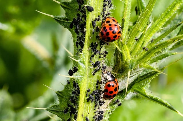 Szkodniki roślin ozdobnych w ogrodzie i ich zwalczanie