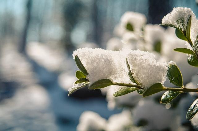 Piękny ogród zimą - jak go wykonać?