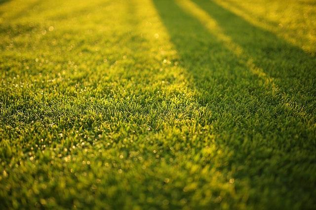 Jesień - najlepszy czas na wertykulacje trawnika