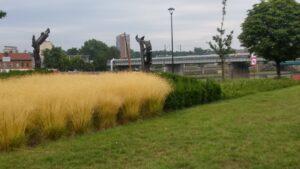 Zakładanie trawników z siewu w Krakowie