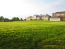 Zakładanie trawnika – które gatunki traw są najlepsze? Poradnik ogrodnika