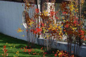 Mocne akcenty w ogrodzie,intensywne i soczyste kolory. Przyciągają uwagę, stwarzają wrażenie siły. Kraków, Wieliczka, Wadowice.