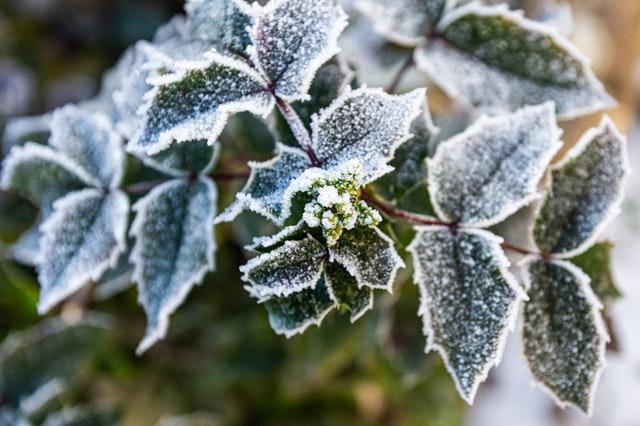 Jak przygotować ogród na przyjście mroźnej zimy?