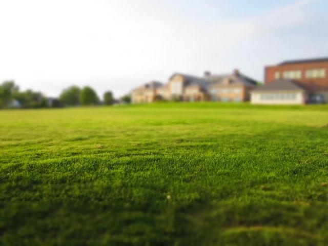 Zakładanie trawnika - które gatunki traw są najlepsze? Poradnik ogrodnika